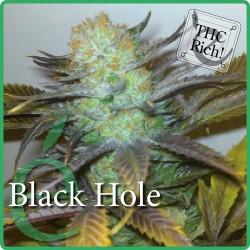 BLACK HOLE (ELITE SEEDS)...