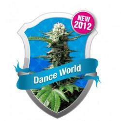 DANCE WORLD CBD FEMINIZADA...