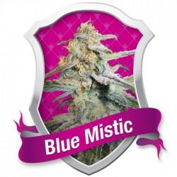 BLUE MISTIC (ROYAL QUEEN...