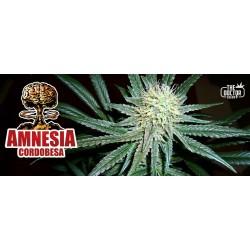 AMNESIA CORDOBESA...