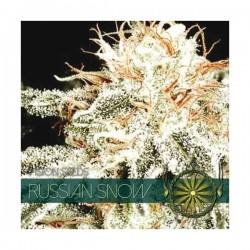 RUSSIAN SNOW FEMINIZADA...