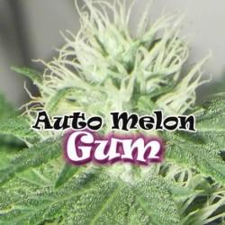 AUTO MELON GUM (DR....