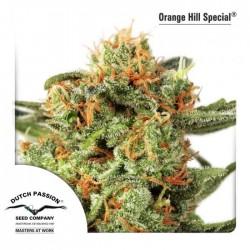 ORANGE HILL SPECIAL (REGULAR)