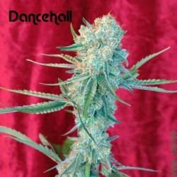 DANCEHALL (REGGAE SEEDS)...