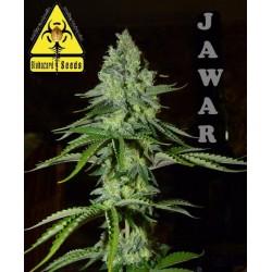JAWAR (BIOHAZARD SEEDS)...